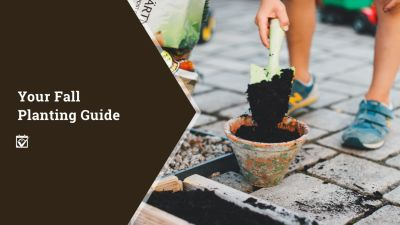 Your Fall Planting Guide