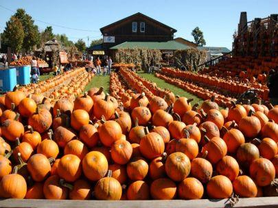 It's Pumpkin Picking Time!