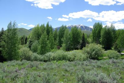 Over 1/2 Acre of Sunny Sun Valley Magic!