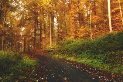 Fall Foliage in Georgia 2021