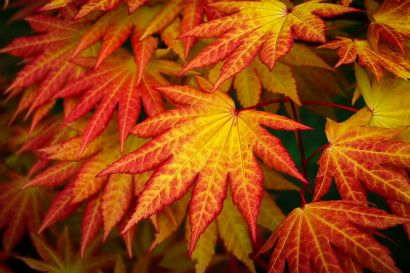 Best Places to View Fall Foilage