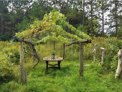 Imagine Your Own Organic Vineyard and Garden!
