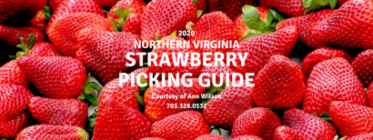 Northern Virginia Strawberry Picking Guide