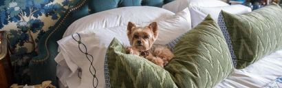 Designing for Homes with Dogs