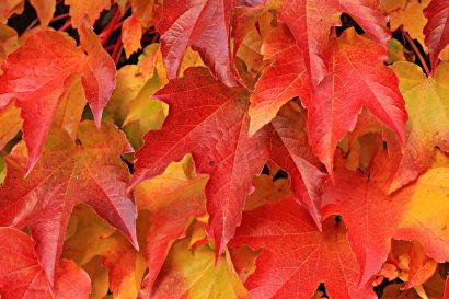 How to Prepare Your Home for Fall