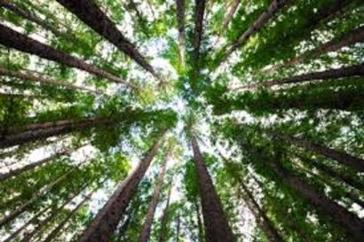 Help Keep The Woodlands Full of Trees!