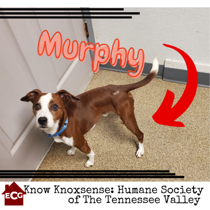Know Knoxsense: Humane Society of the Tennessee Valley