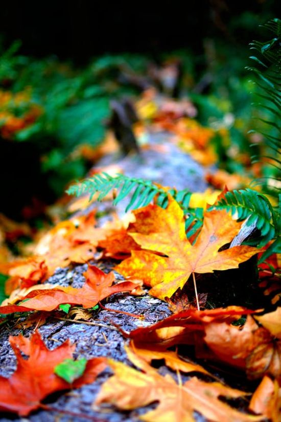 25 Plants and Trees for Winning Fall Color