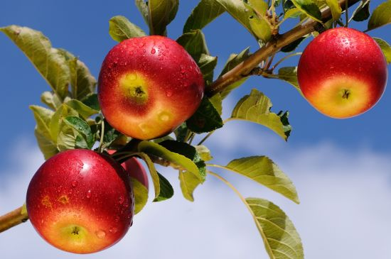 Madison Area Apple Orchards to Visit