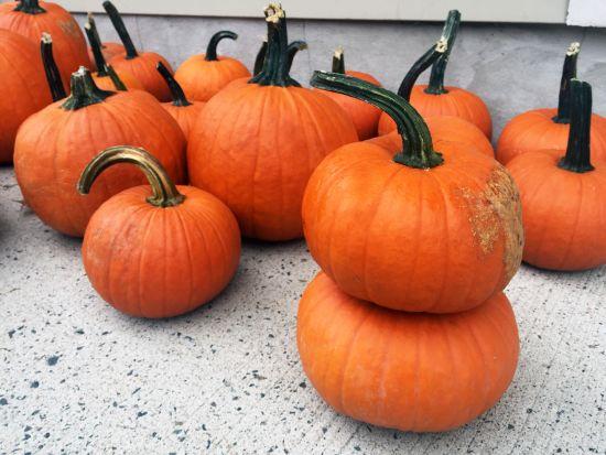 Annual Pumpkin Giveaway — October 19