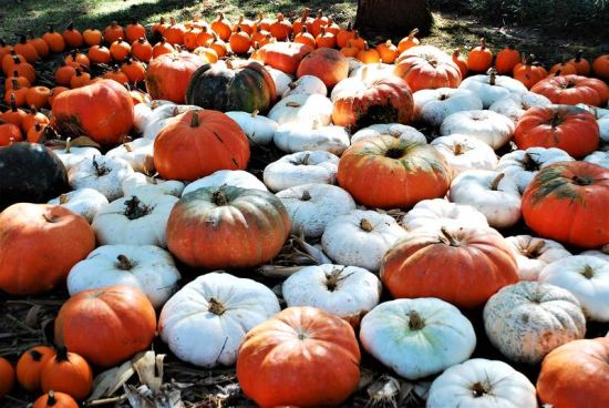 Map of Pumpkin Patches in San Antonio and Surrounding Areas