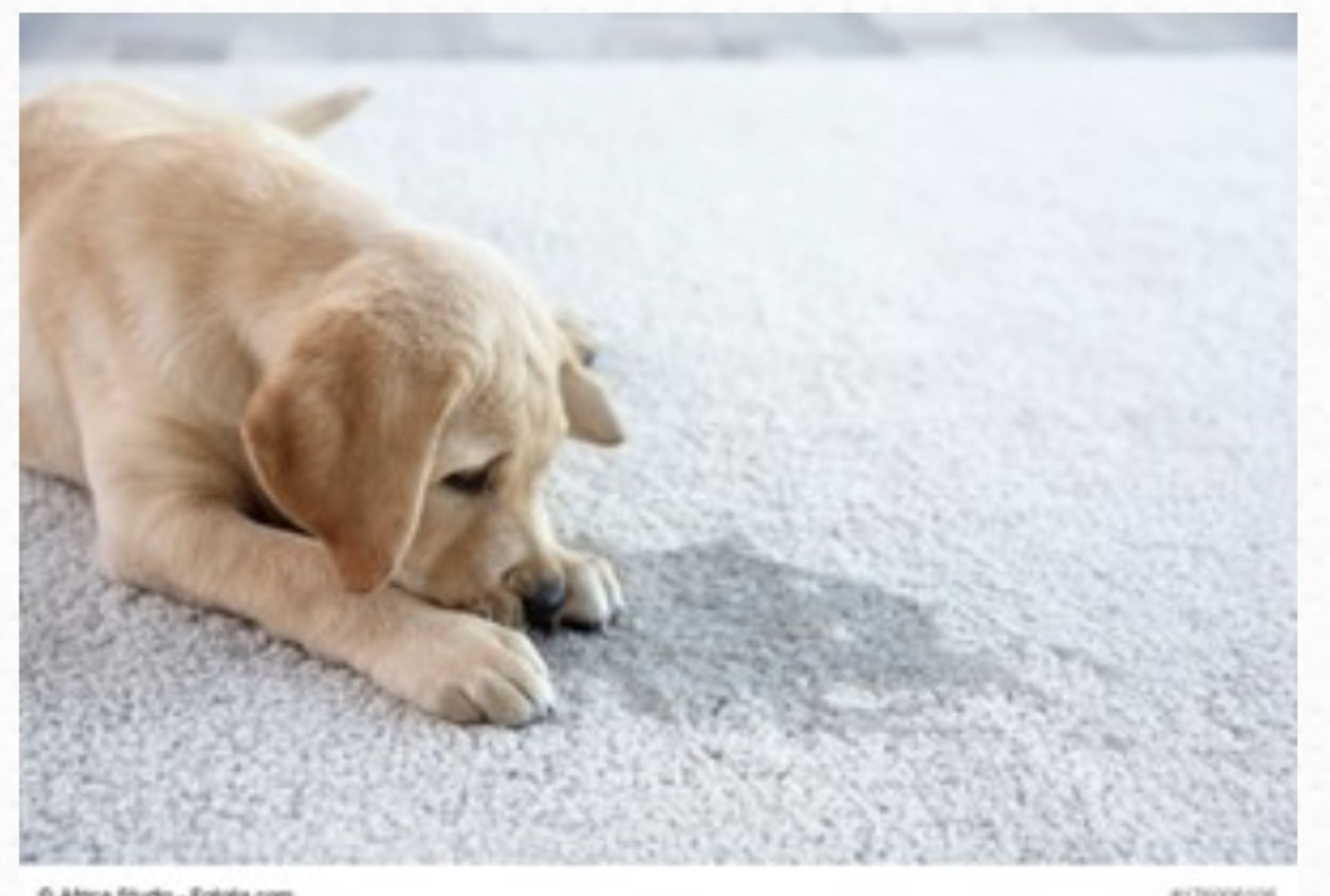 Advantages and Disadvantages of Carpeting