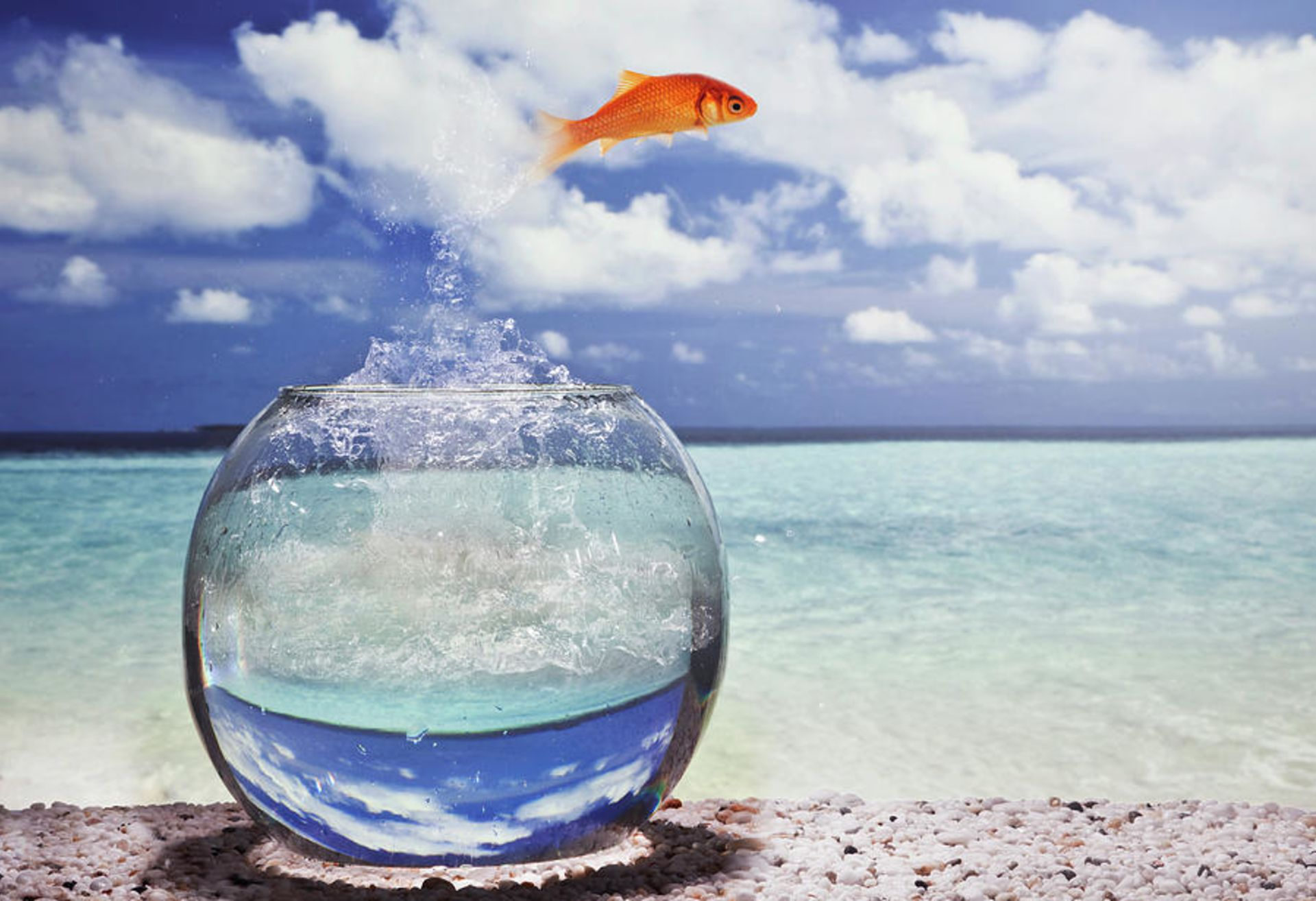 Would You Go Fishing In A Goldfish Bowl???