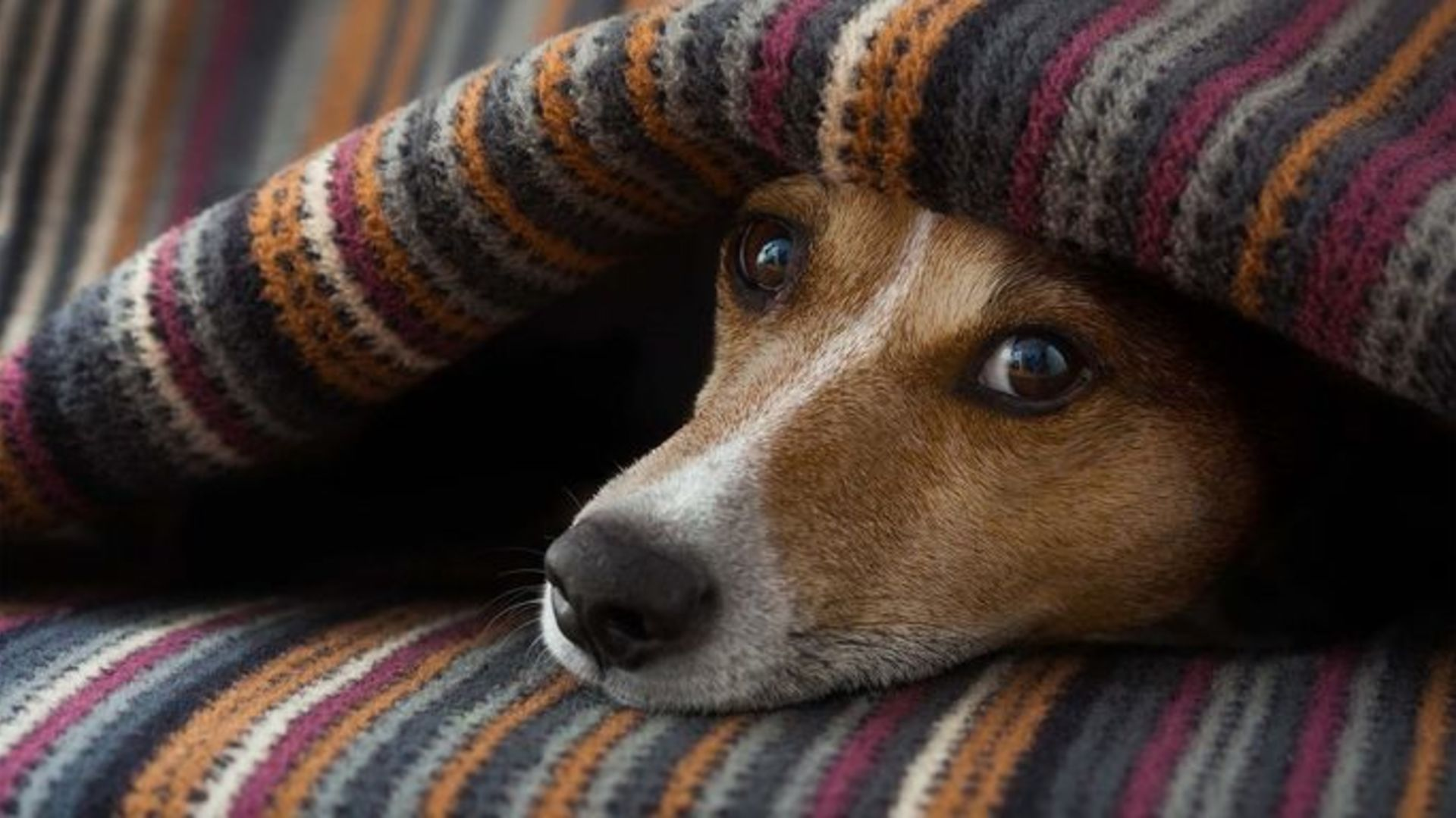Selling a Home with Pets?  Avoid these 7 mistakes that could cost you thousands!
