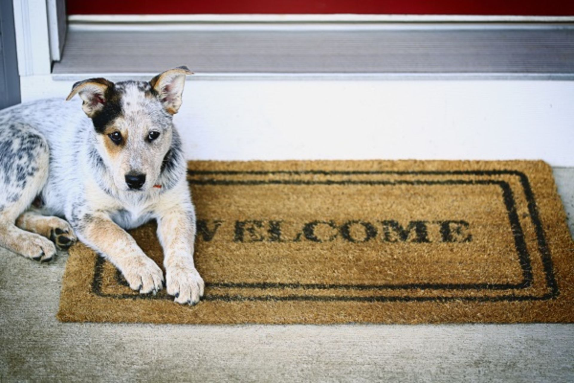 4 TIPS FOR SELLING HOMES WITH PETS THAT WON'T PUT YOU IN THE DOGHOUSE