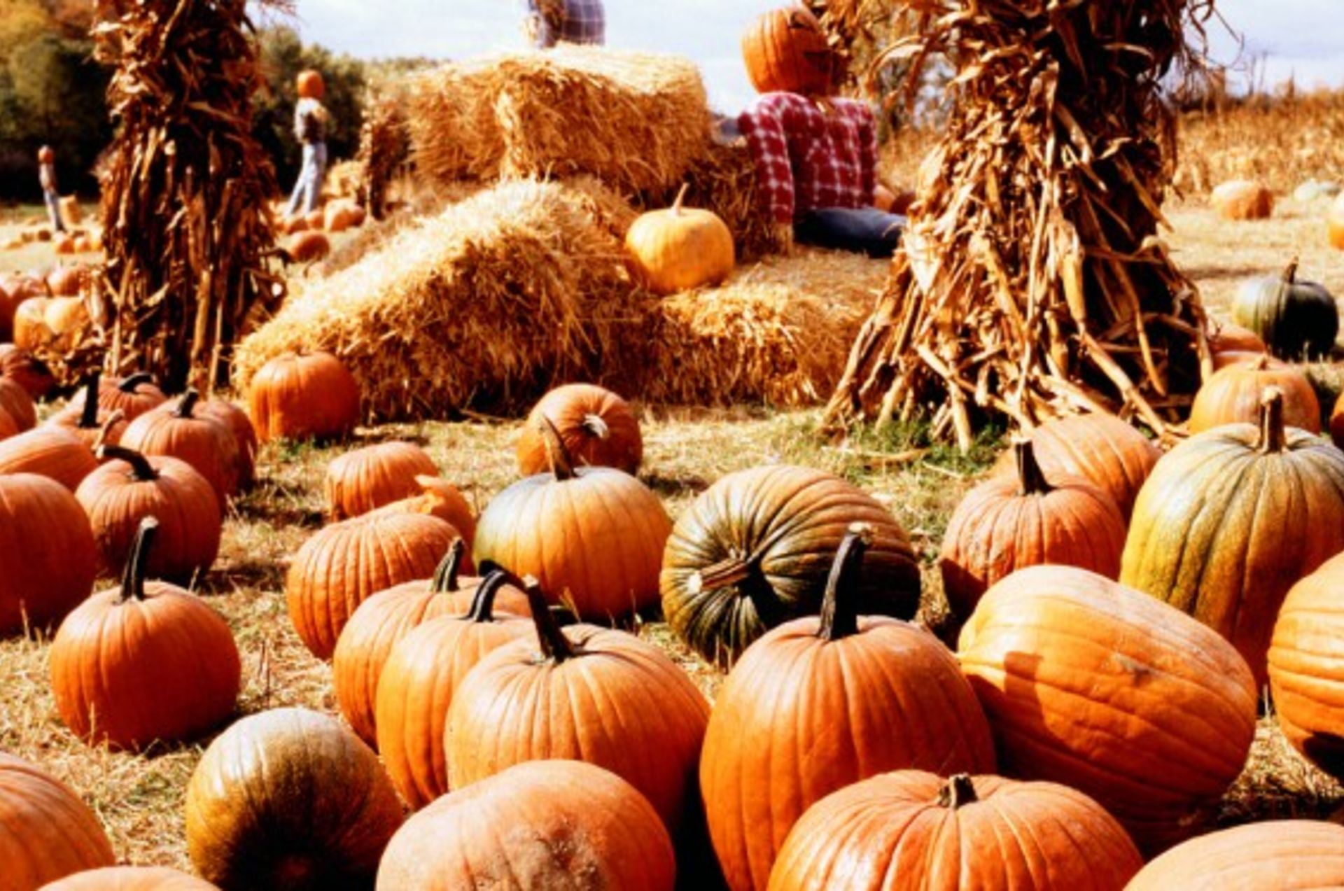 The Top 10 Fall Festivals to Fall In Love With In The Ozarks!