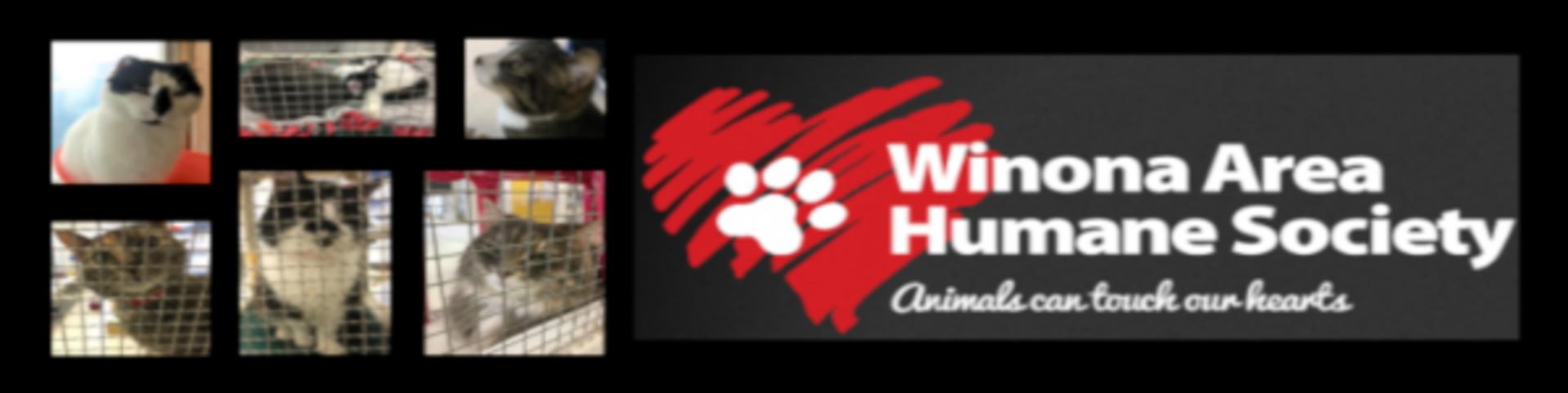 Adopt, Don't Shop! WAHS Volunteering