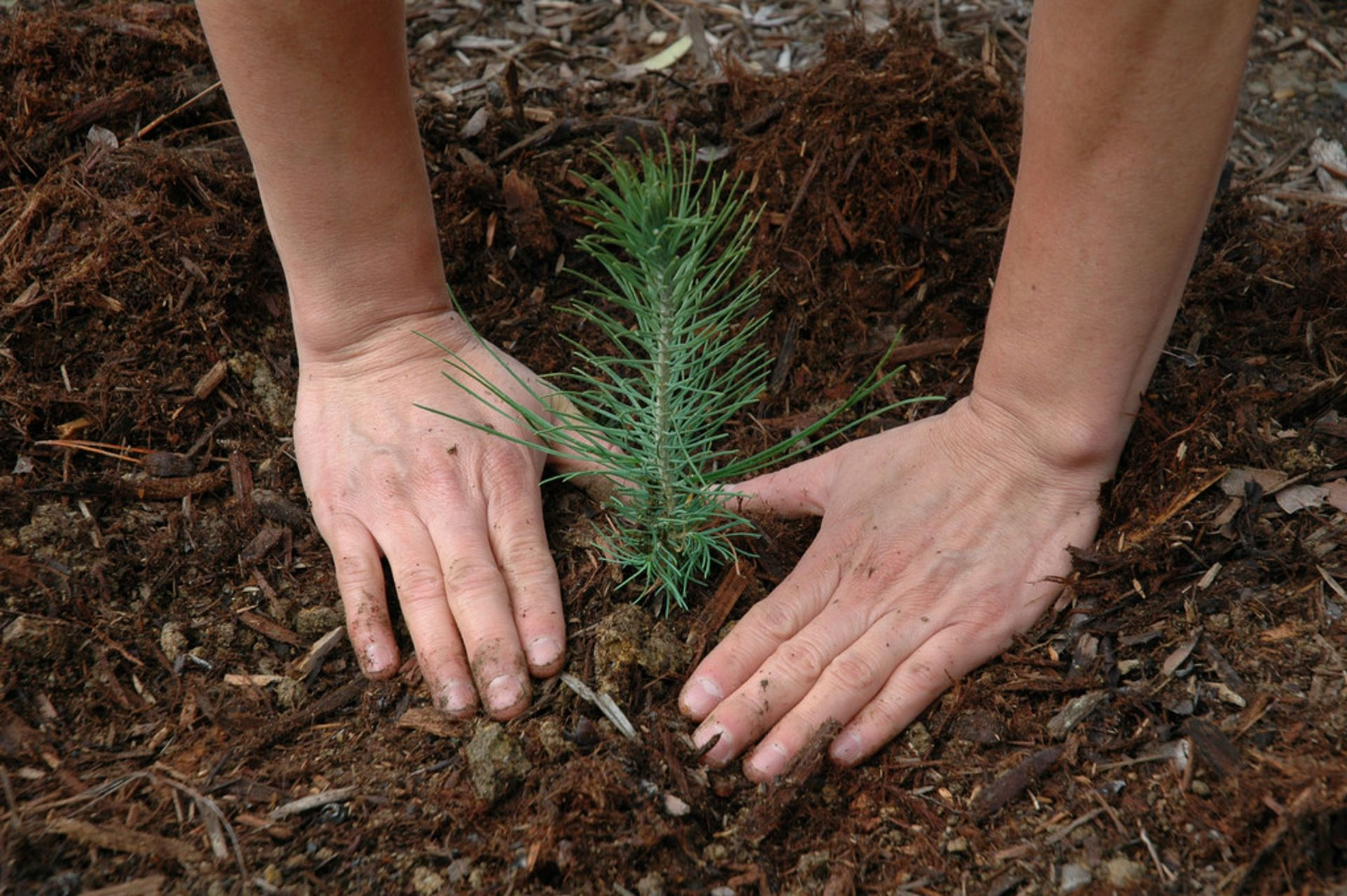 Planting Pro: Tips for a Healthy, Happy Tree