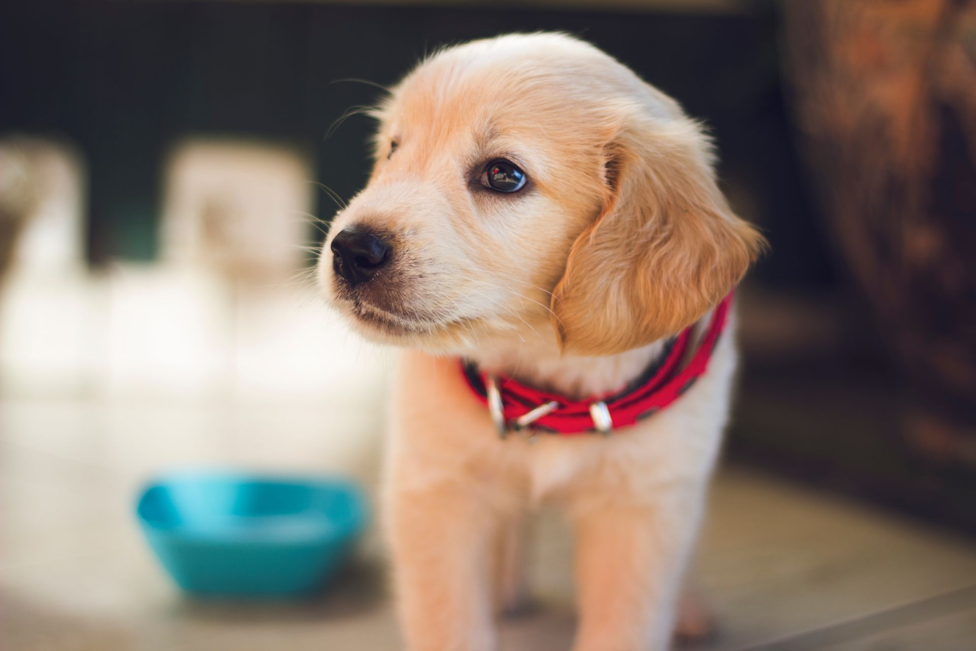 Living with Pets: Carpet Cleaning 101