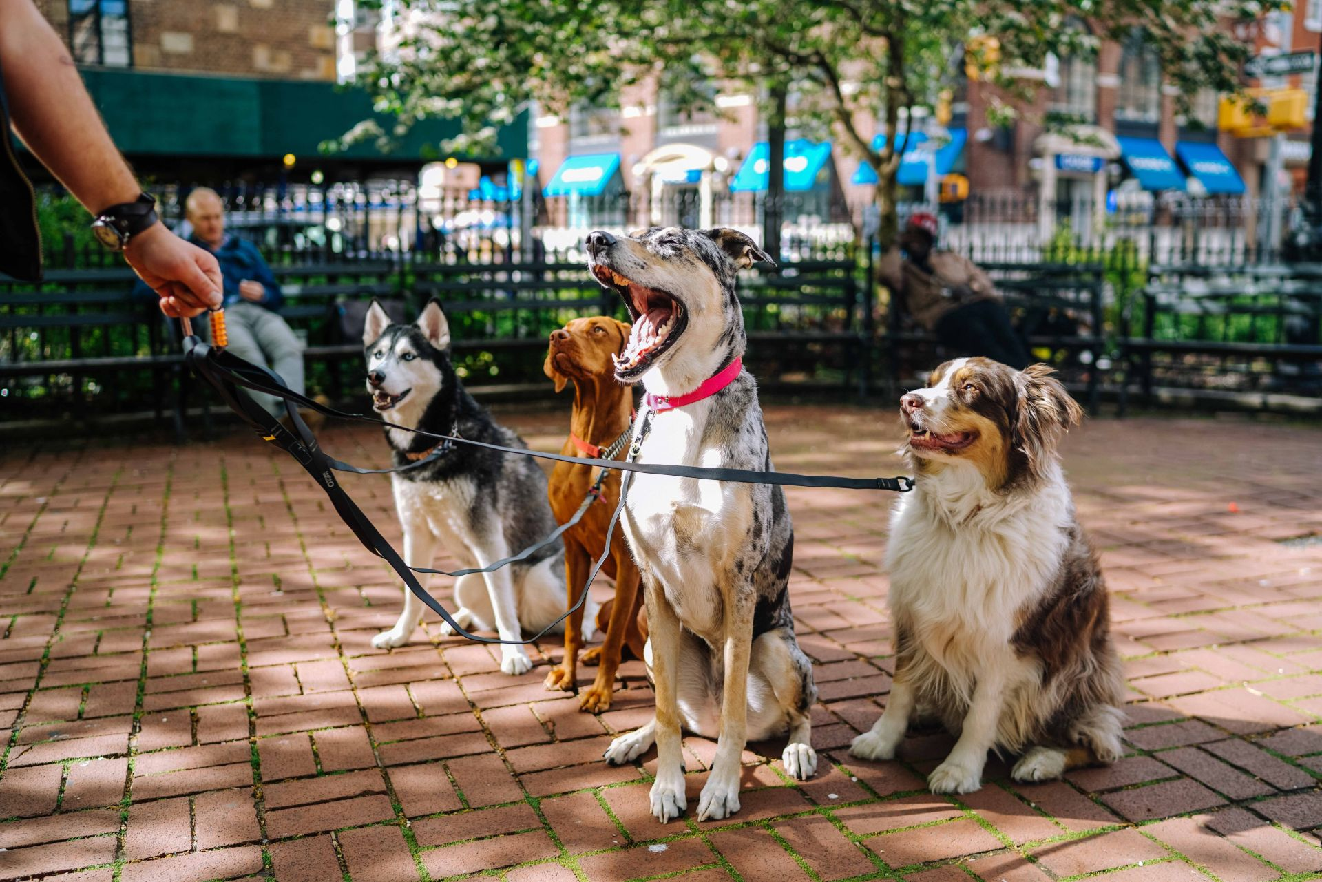 Finding the Perfect Pet-Friendly Neighborhood