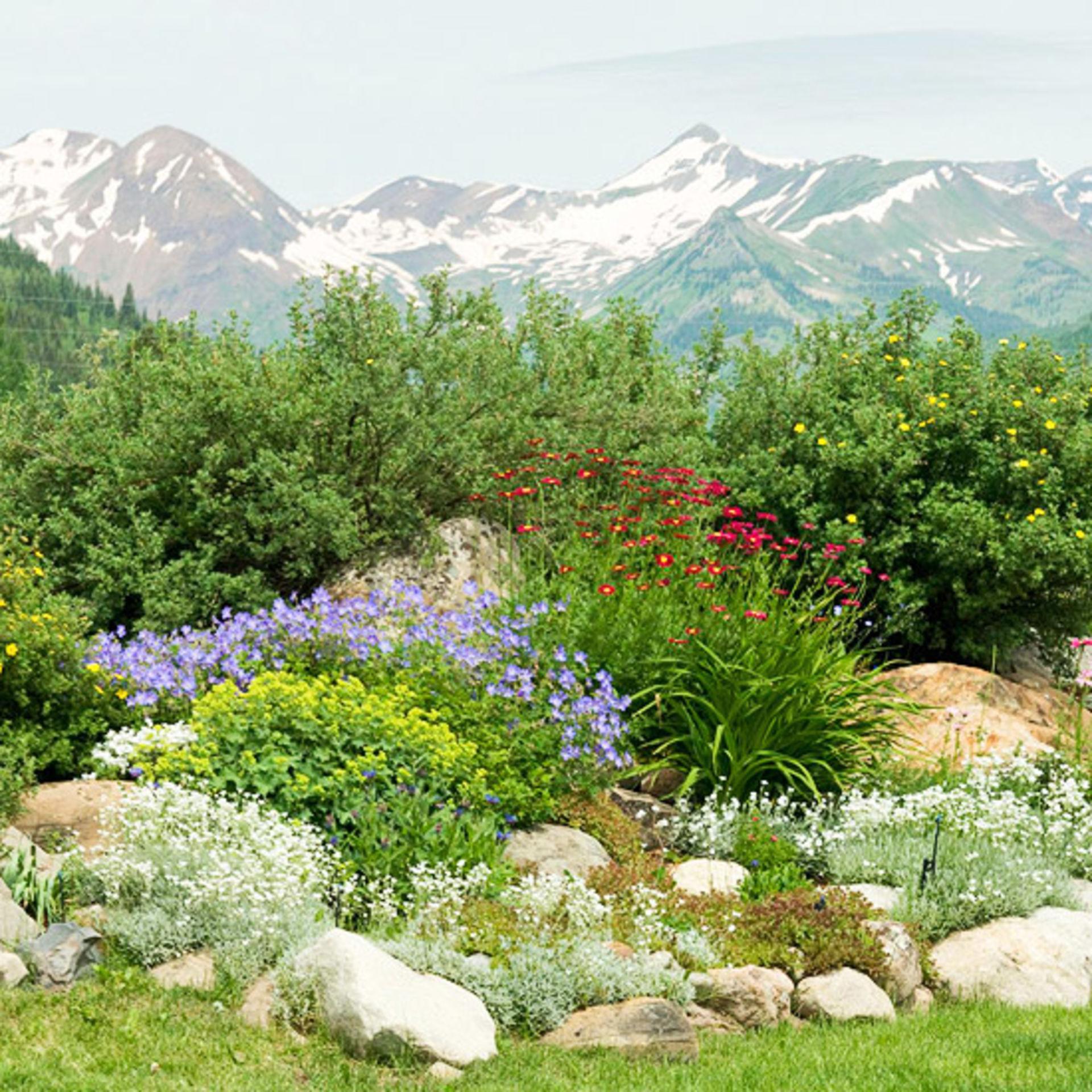 Native Plants = No Fuss Landscape