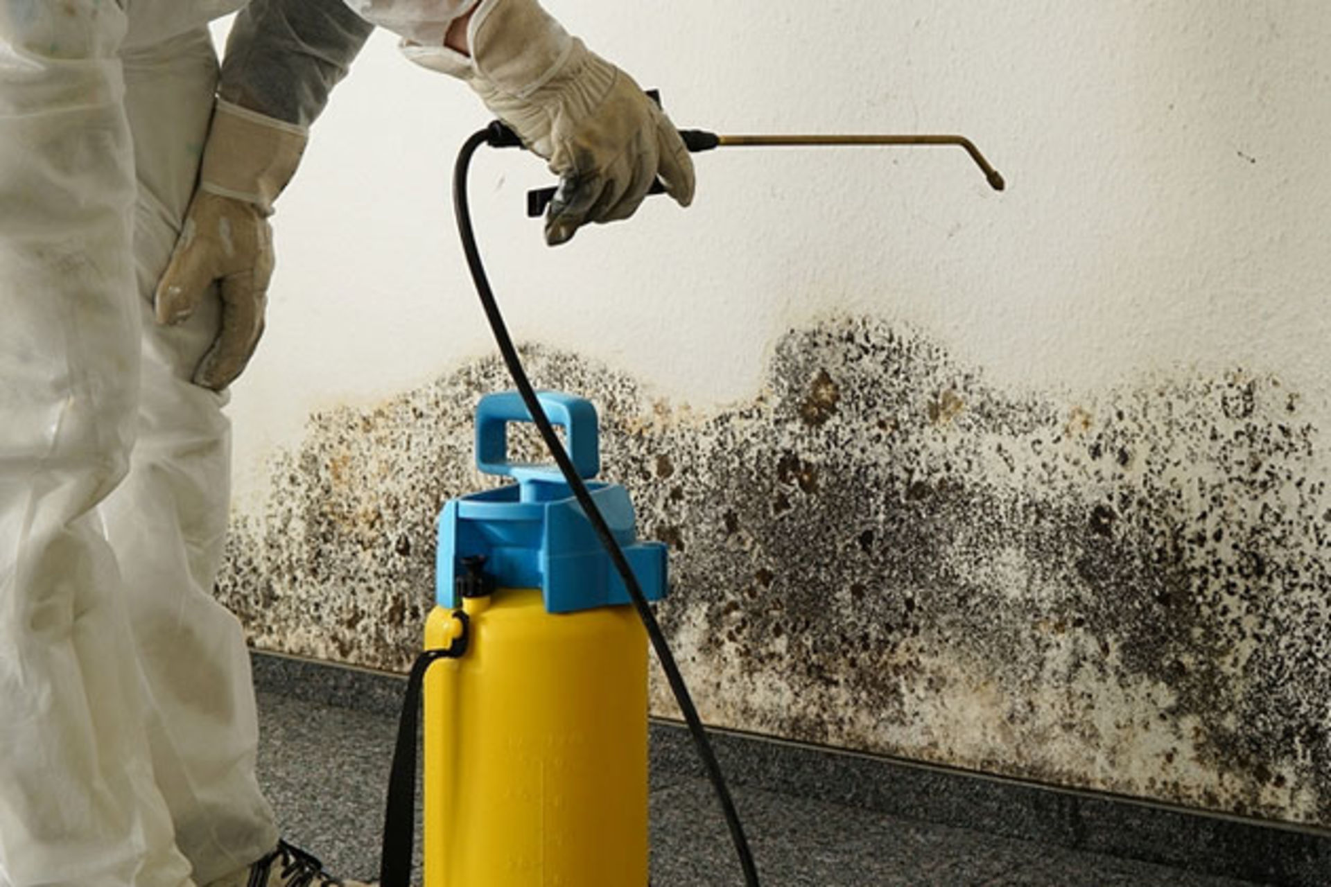 LSLBC addresses questions regarding mold remediation