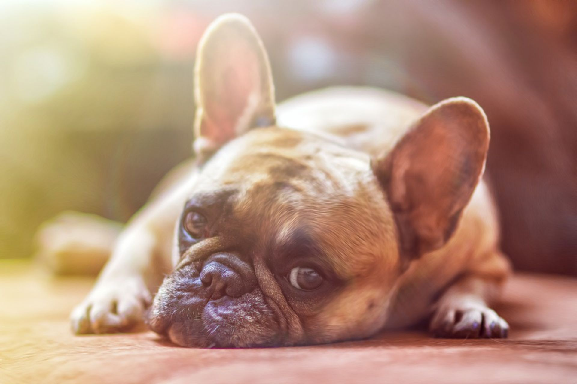 Dog Etiquette When Buying a Home