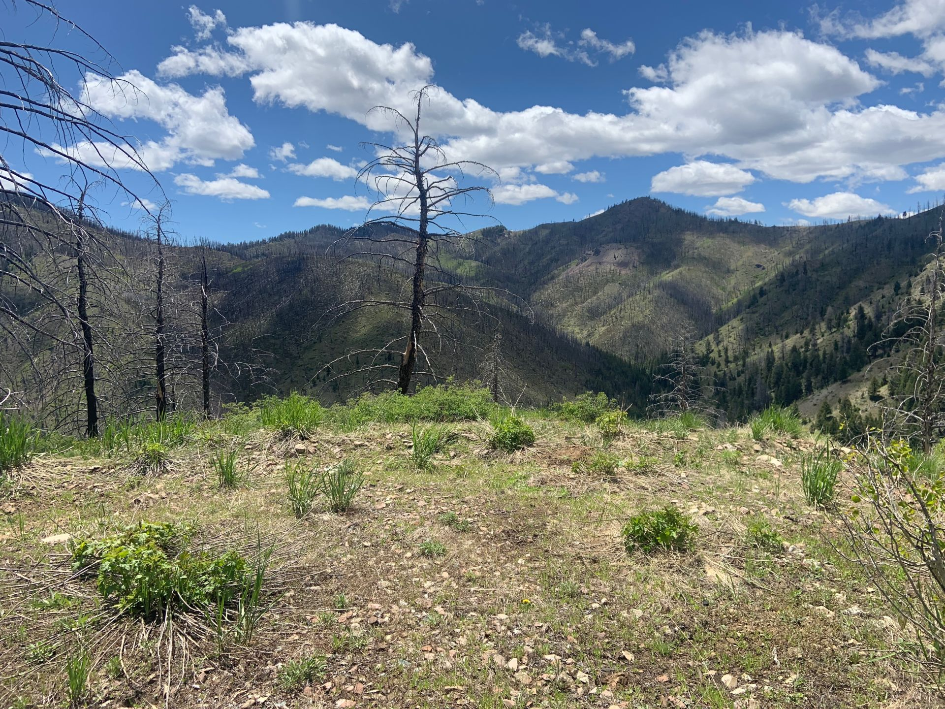 Private Mountain Retreat for Adventurists out West Fork Canyon in Warm Springs!