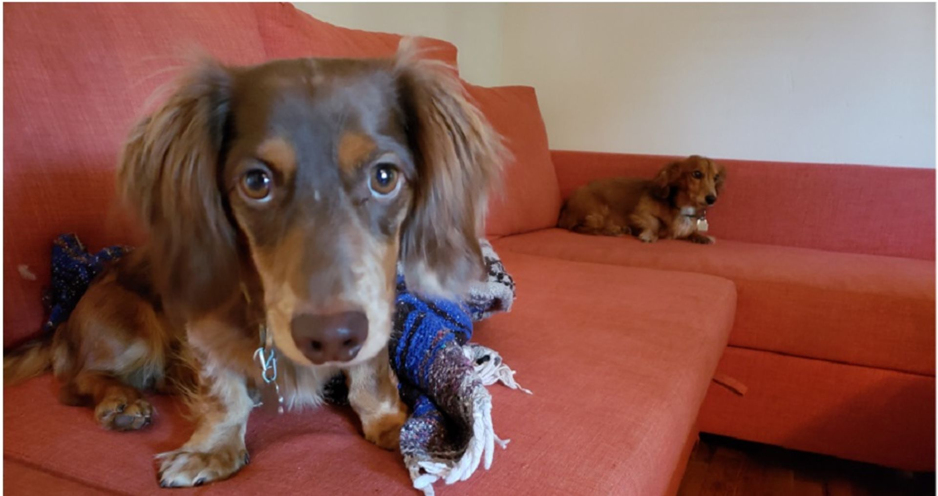 Finding the Perfect Home…. for Your Dog