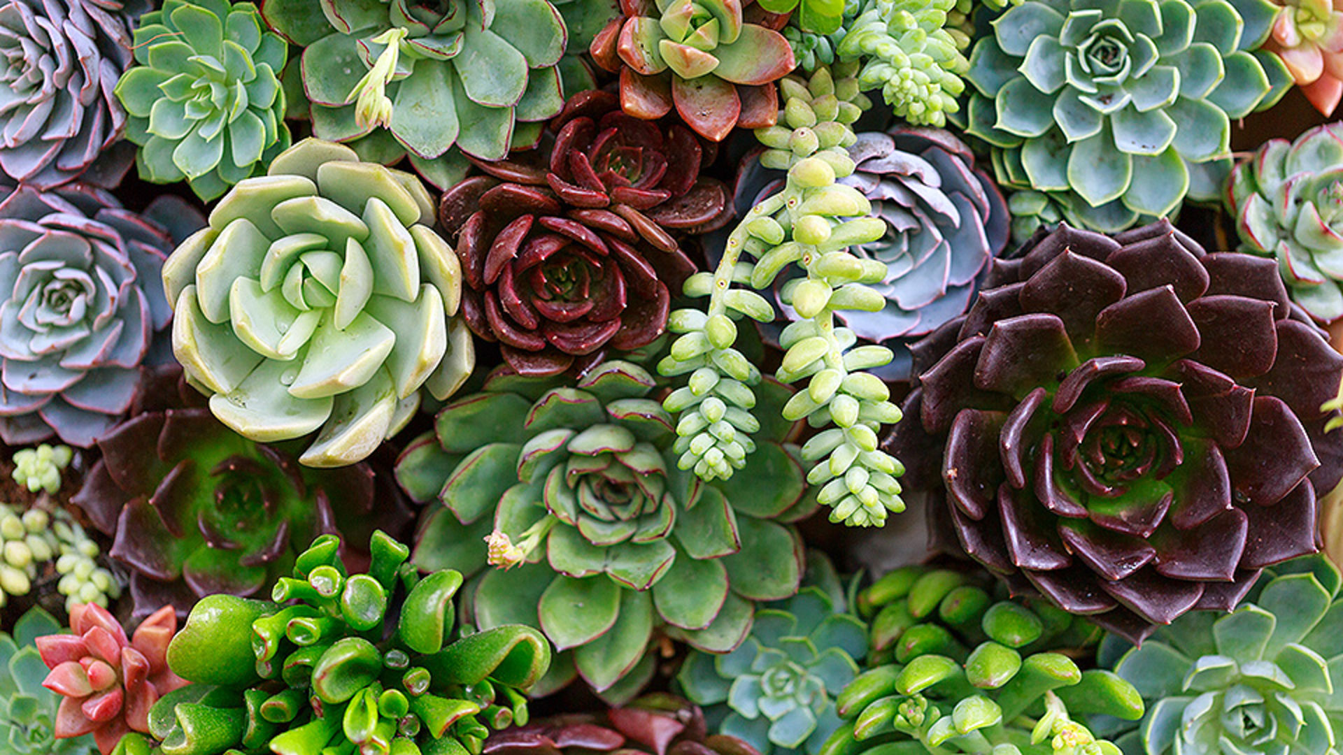 Plant these 12 succulents this summer