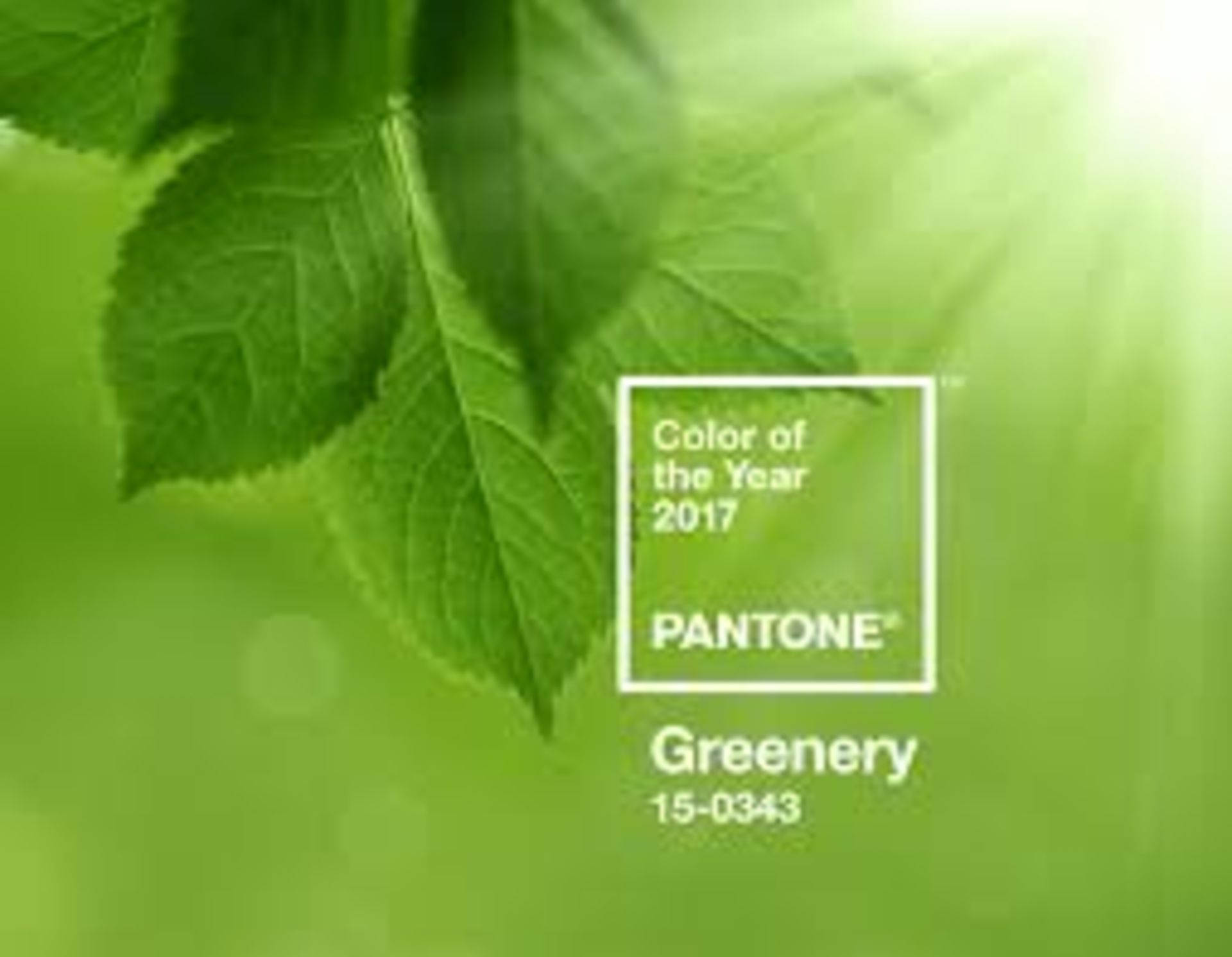 Pantone's Color of the Year and How to Use It