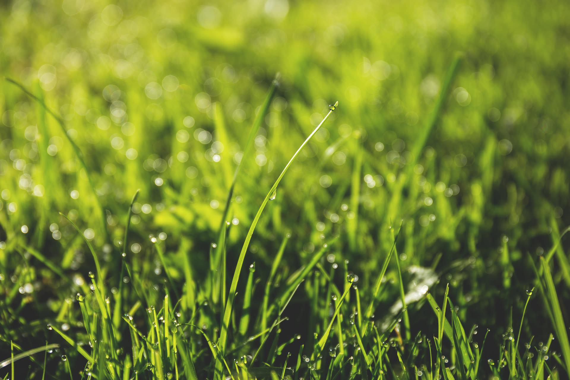 Taking Care of Your South Indiana Lawn Without Wasting Resources