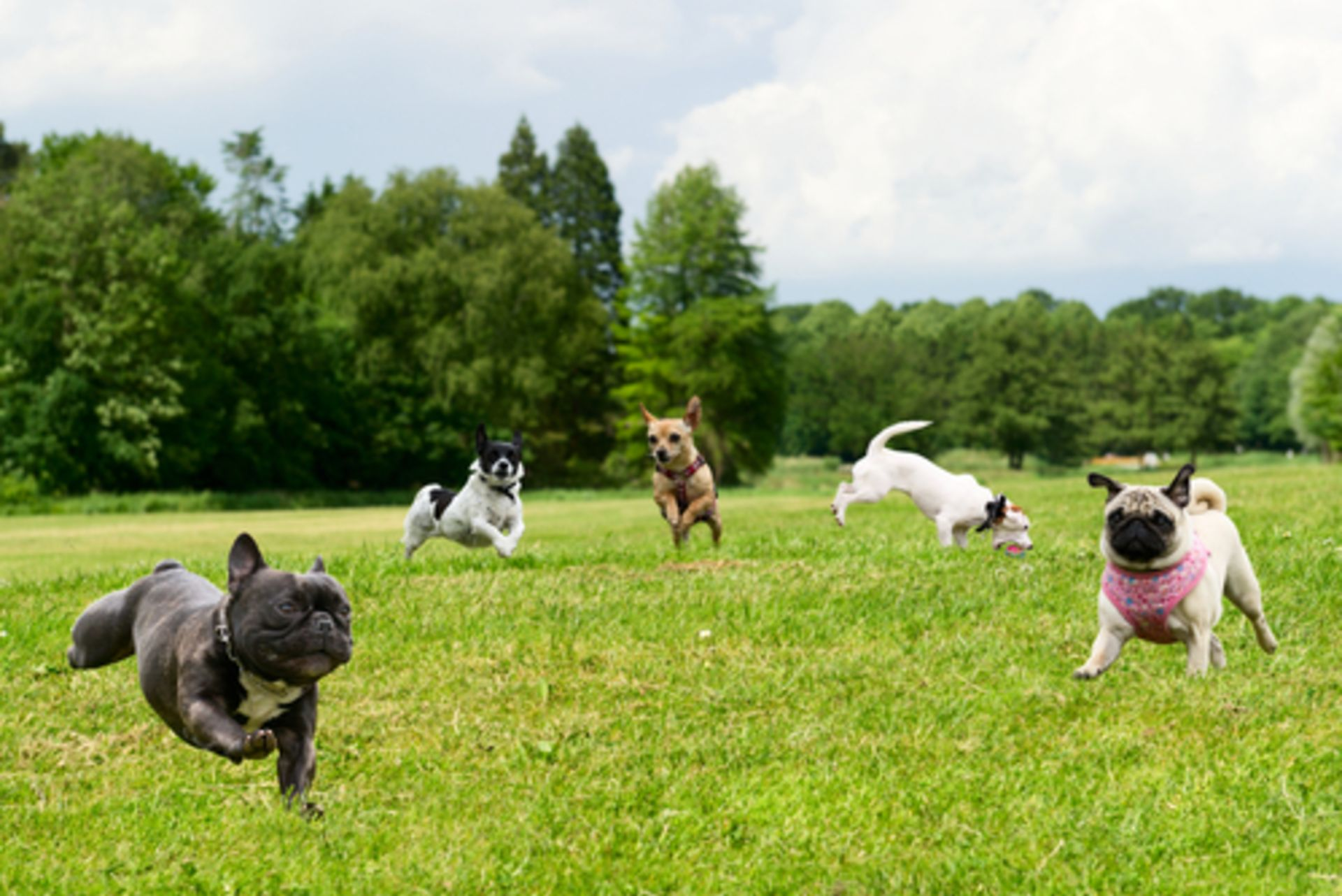 GUEST BLOG – Keeping your Dog Safe in your New Home