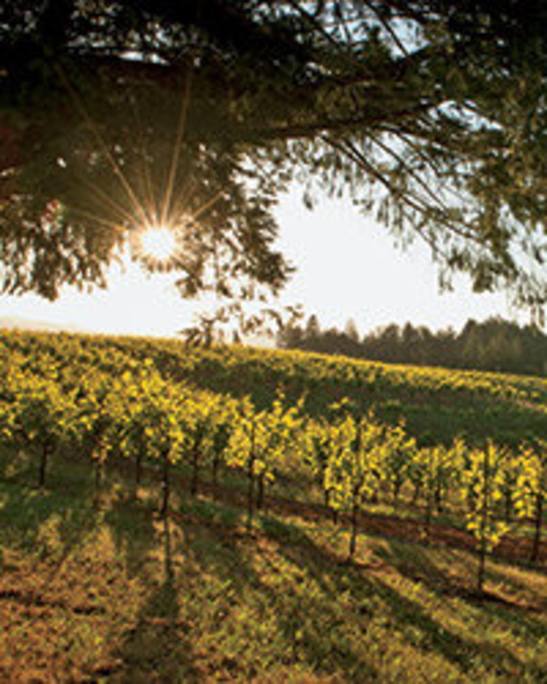 Best California Wineries to Visit
