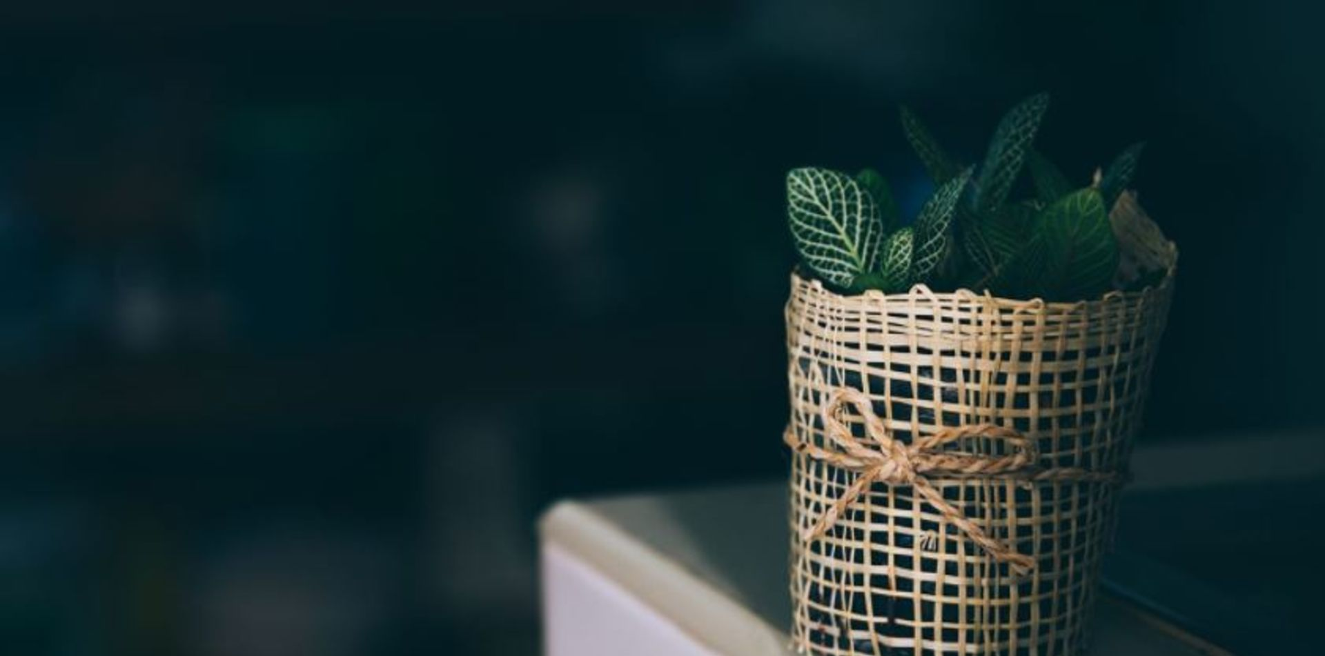 The Best Houseplants for Low-Light Spaces