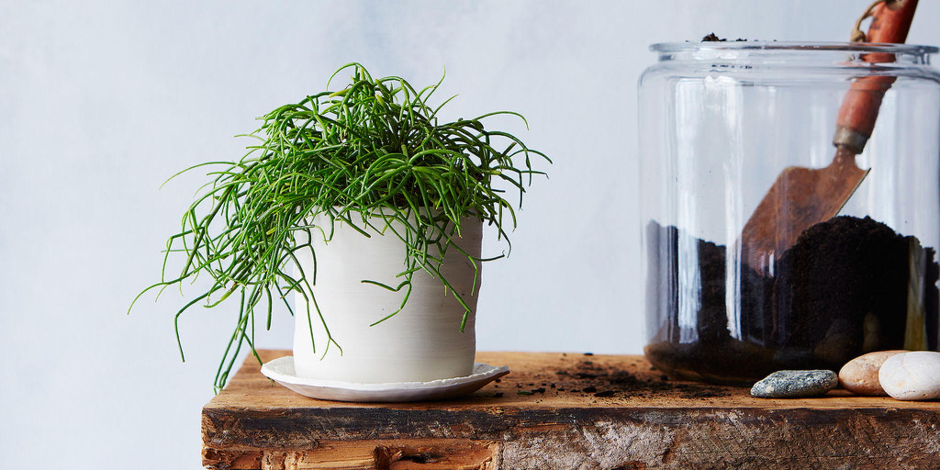 10 Strategies To Stop Murdering Your Plants