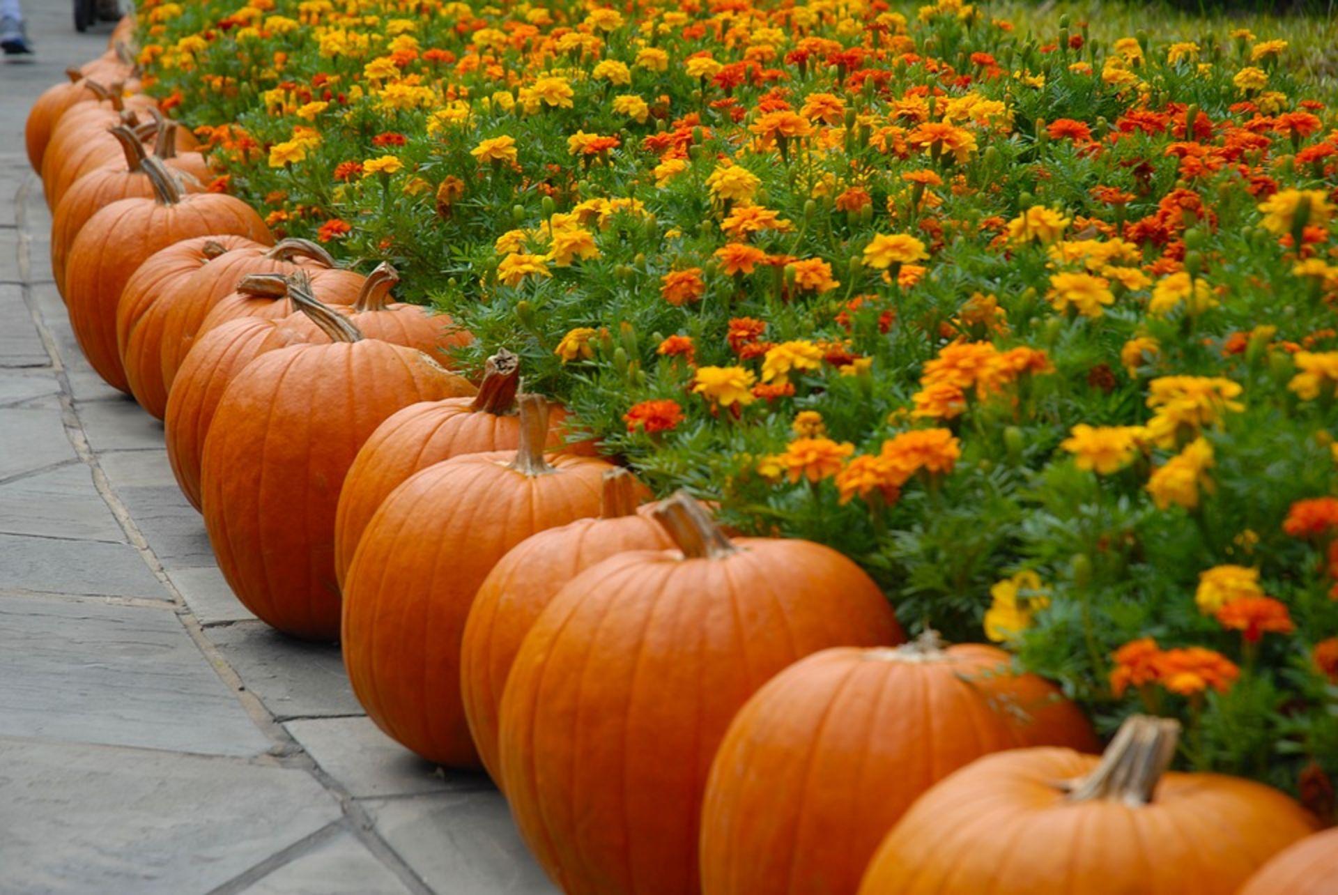 October in New Braunfels