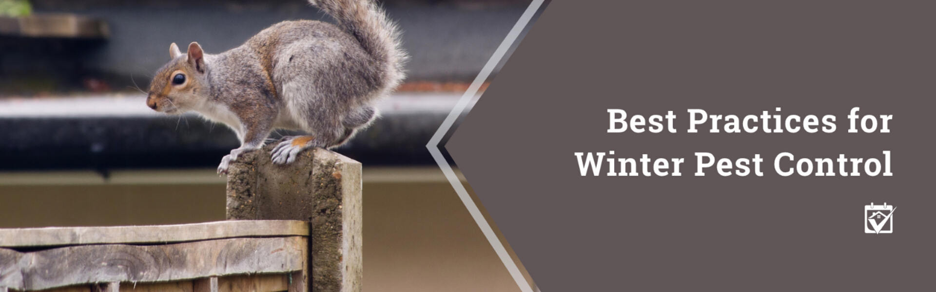Best Practices for Winter Pest Control