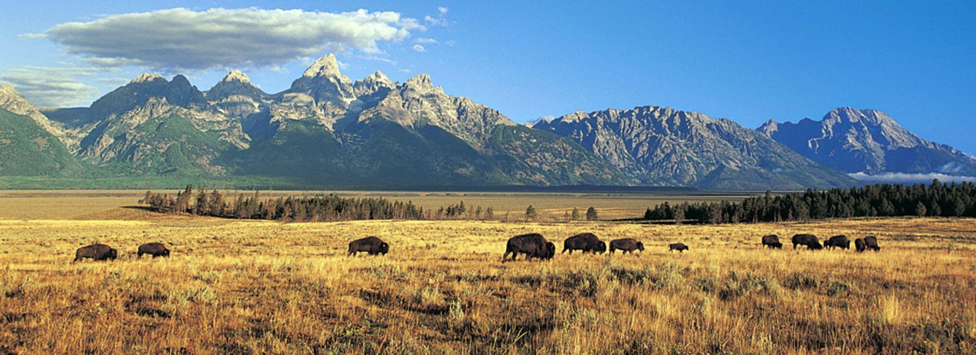 Adventures in the Wild, Wild West