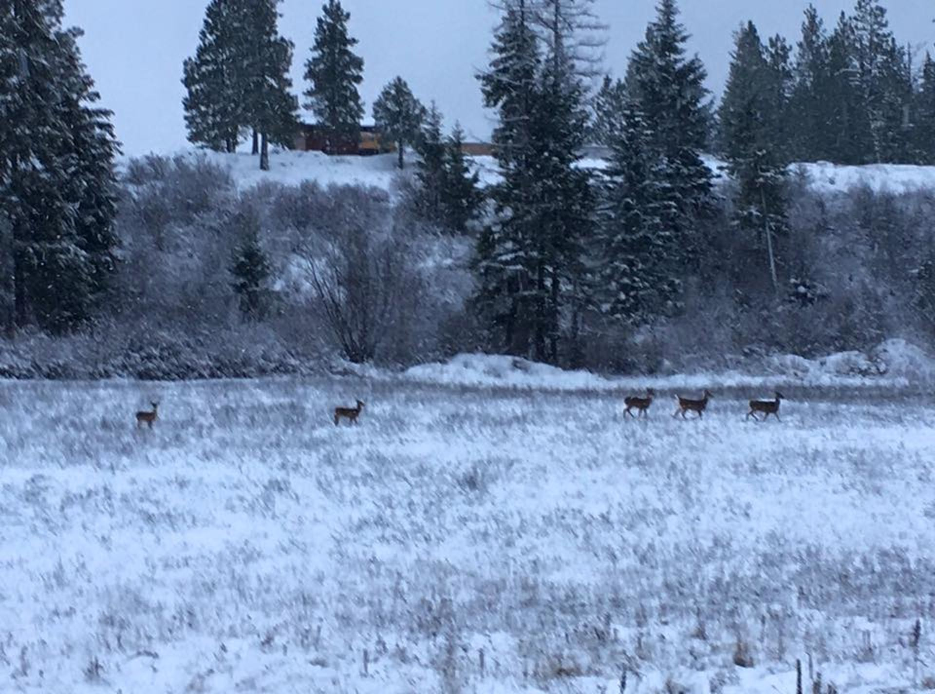 Oh, deer. In spite of snow, officials say DON'T FEED THEM in town!