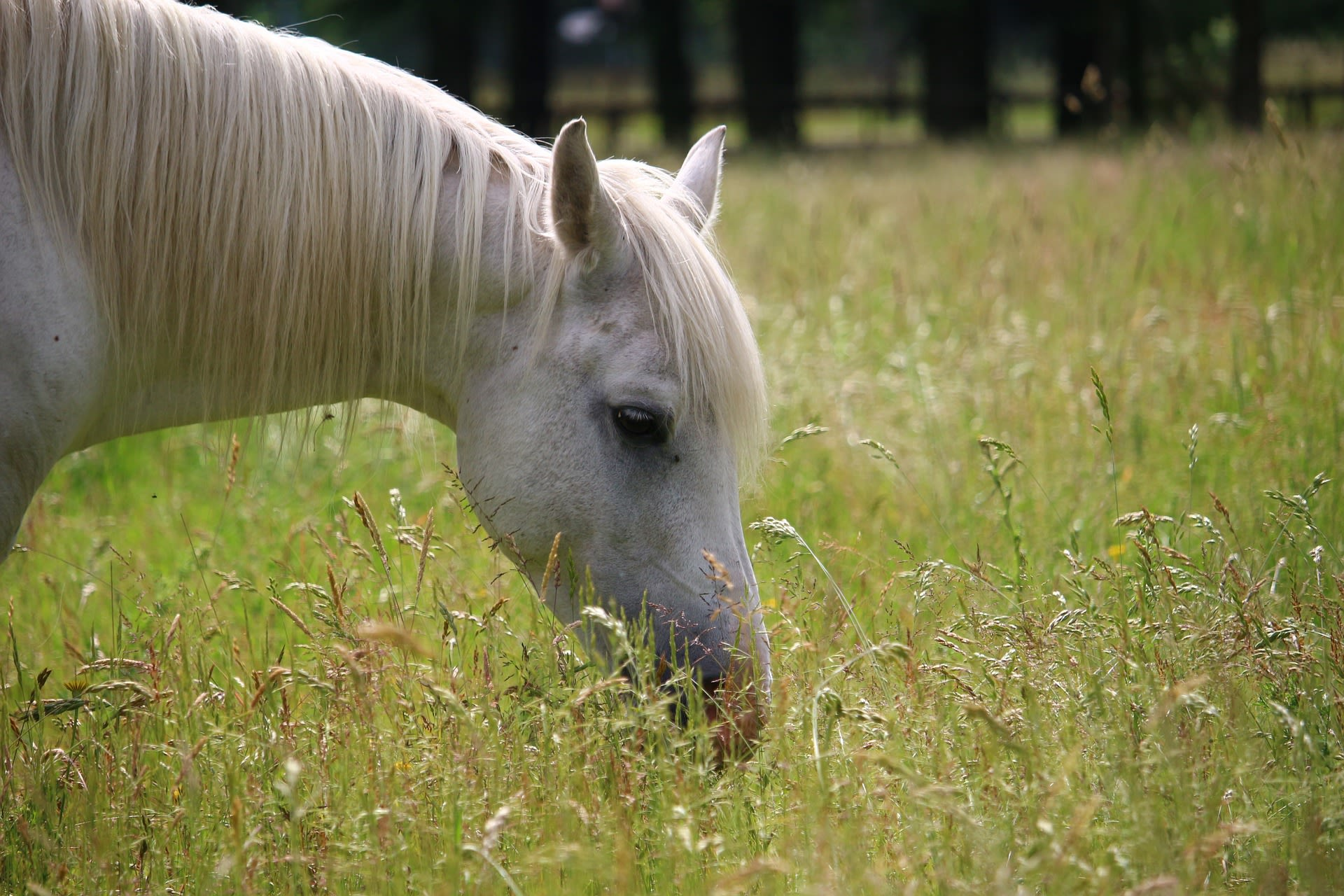 Congress Passes Tax Bill With Horse Benefits