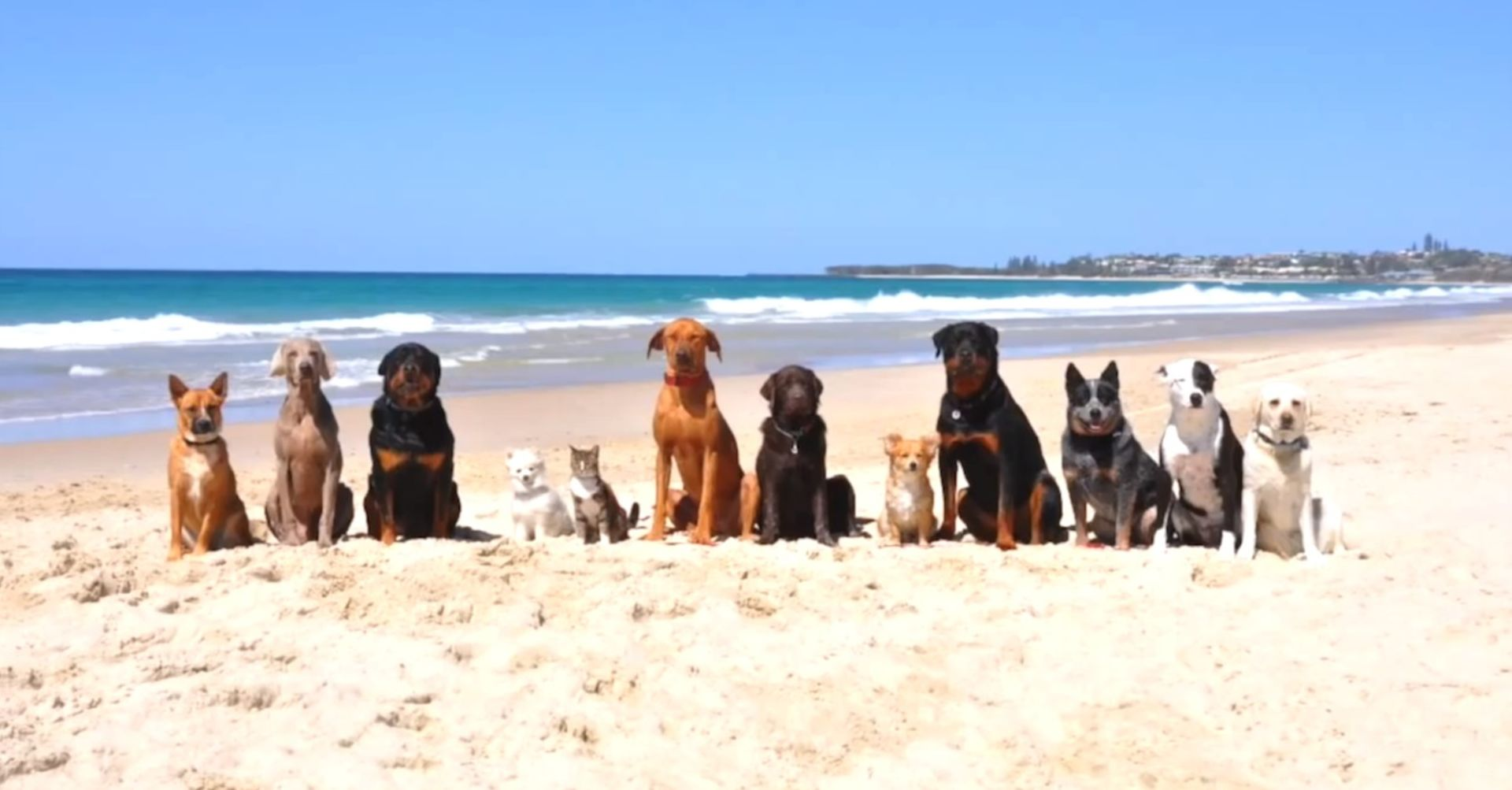 7 Dog Parks Worth Barking About