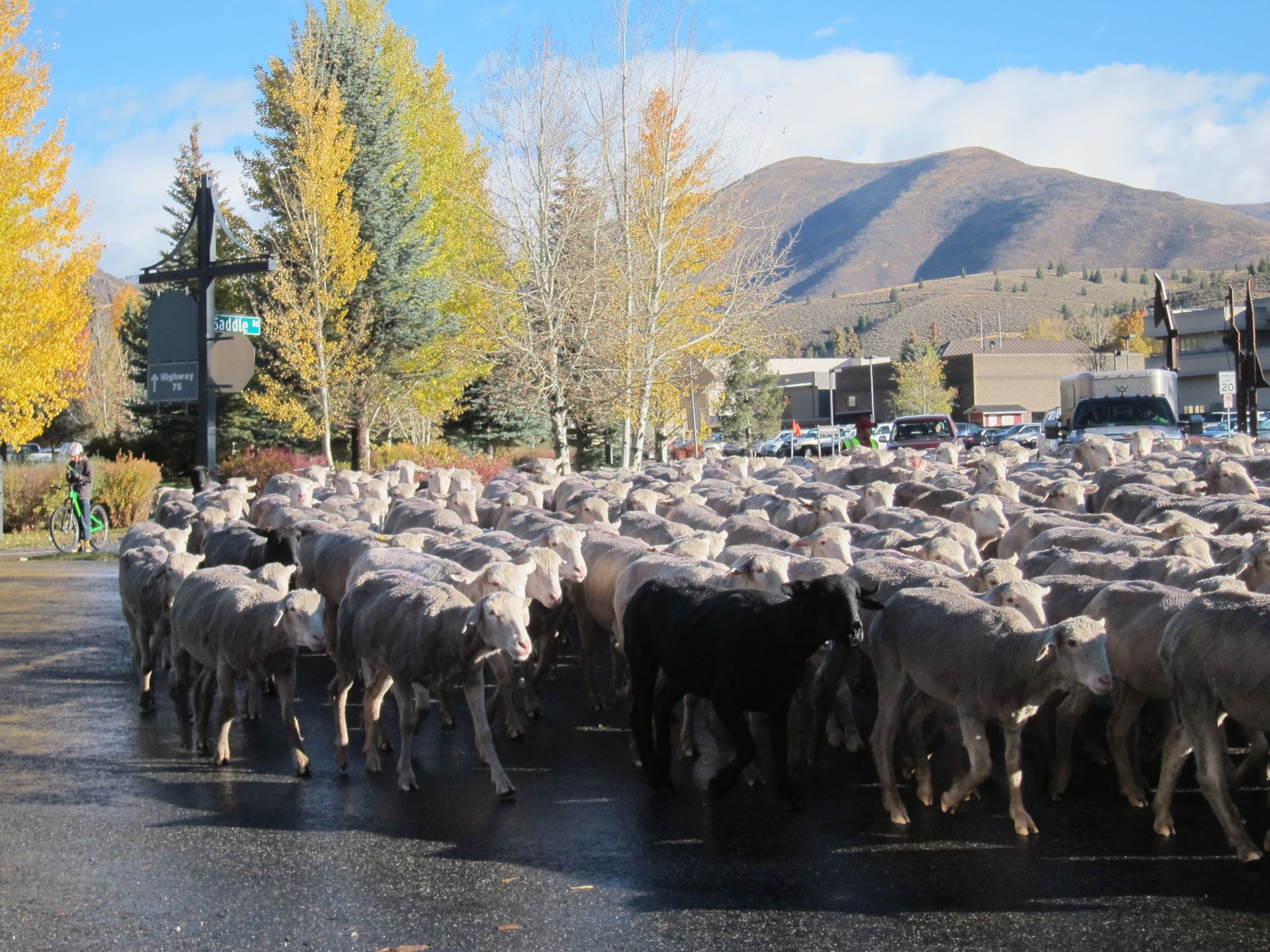 Personal Trailing of the Sheep