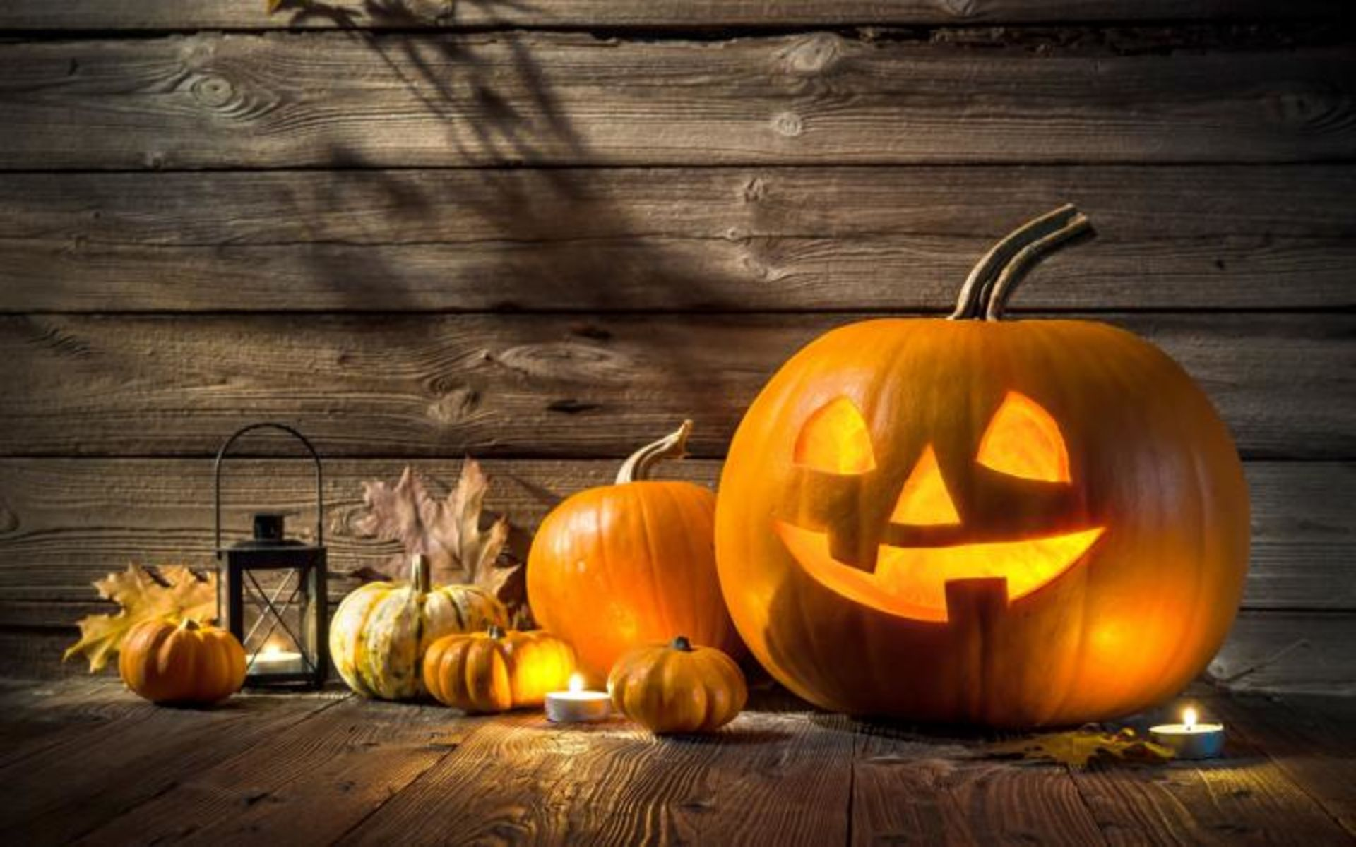 Haunted Houses & Pumpkin Patches for October!
