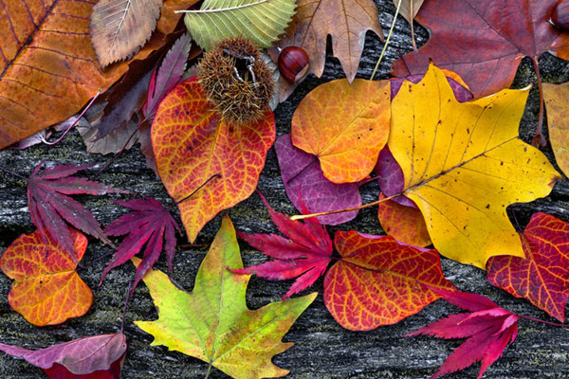 Checklist for fall
