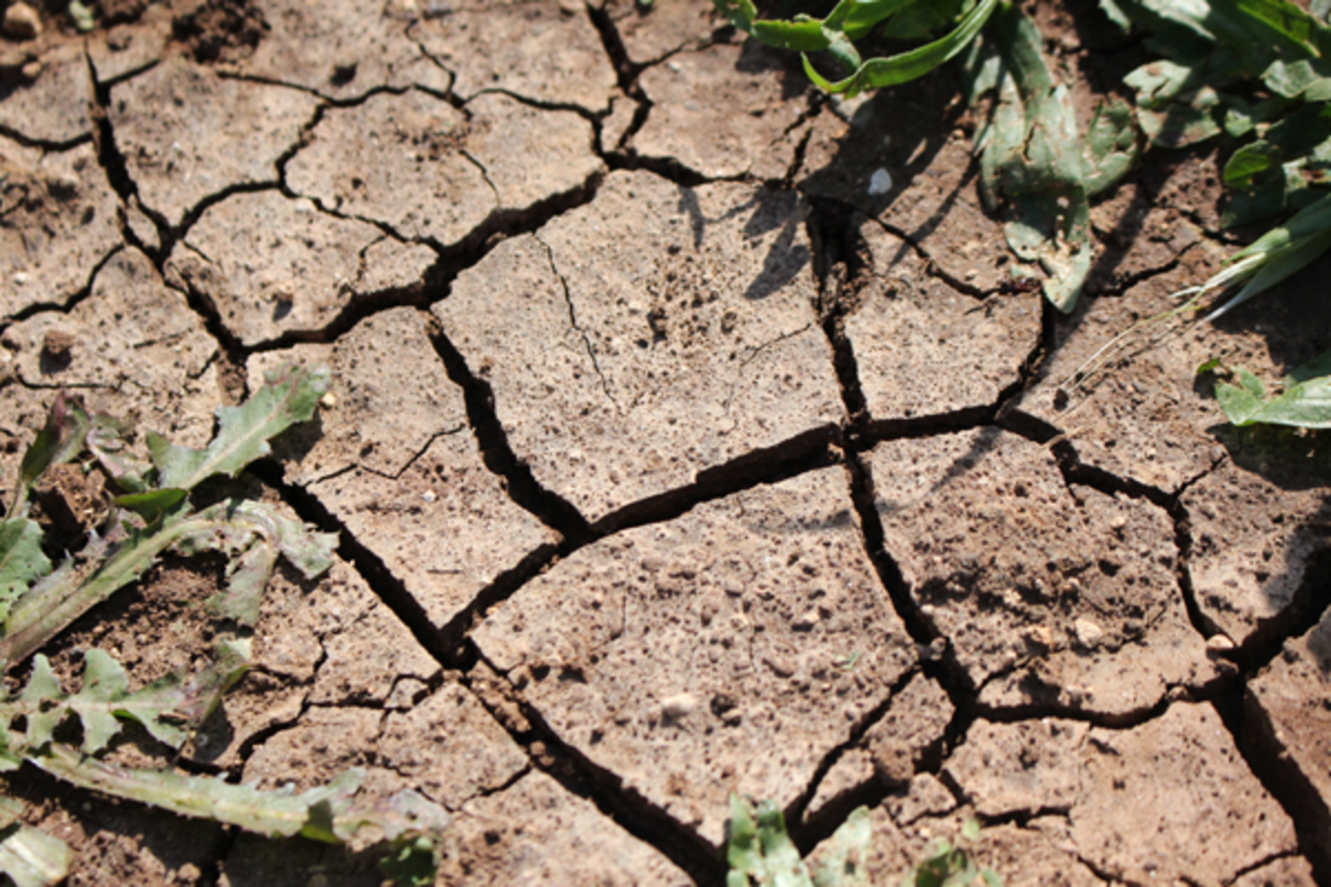 How to Prevent Soil Erosion in North Texas