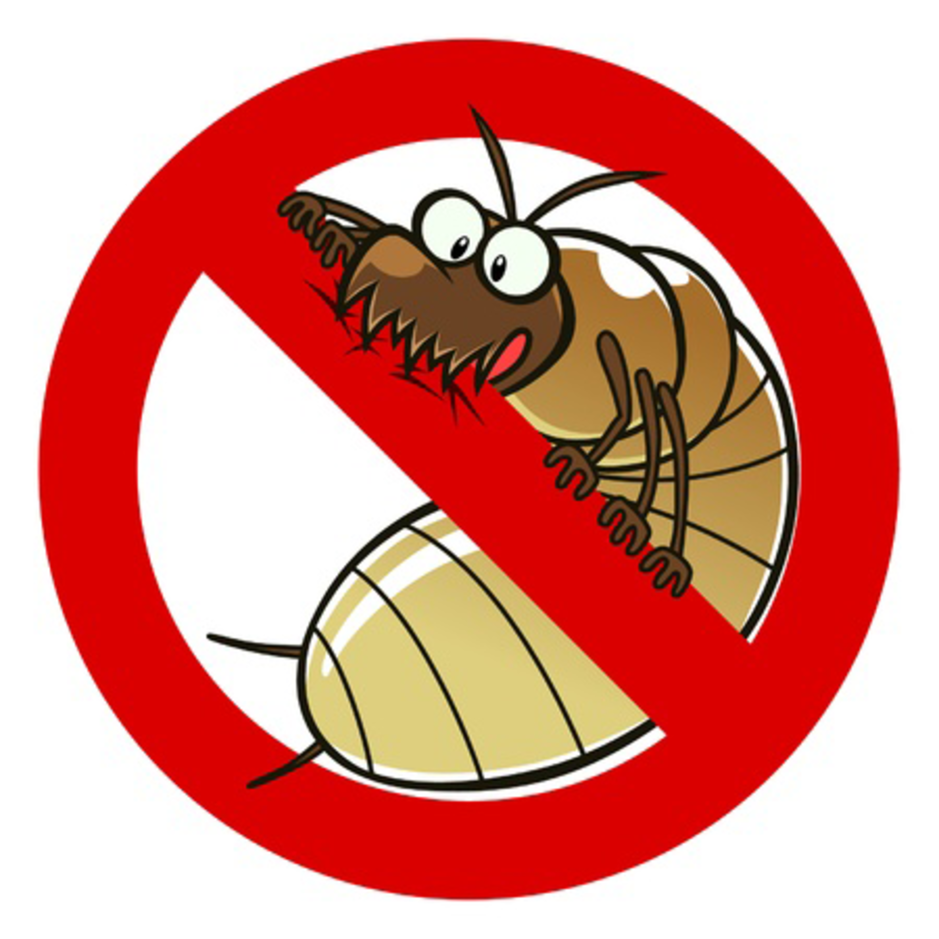 Termite Damage and Real Estate