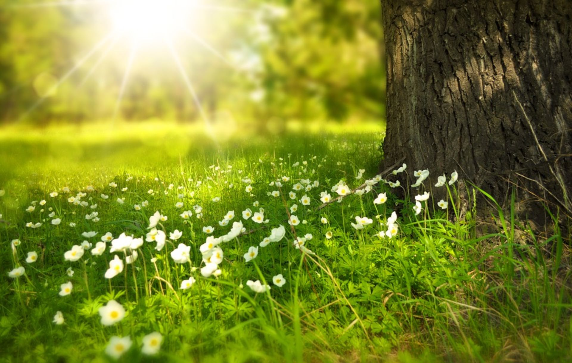 Is Spring Truly The Best Time To Sell Your House?