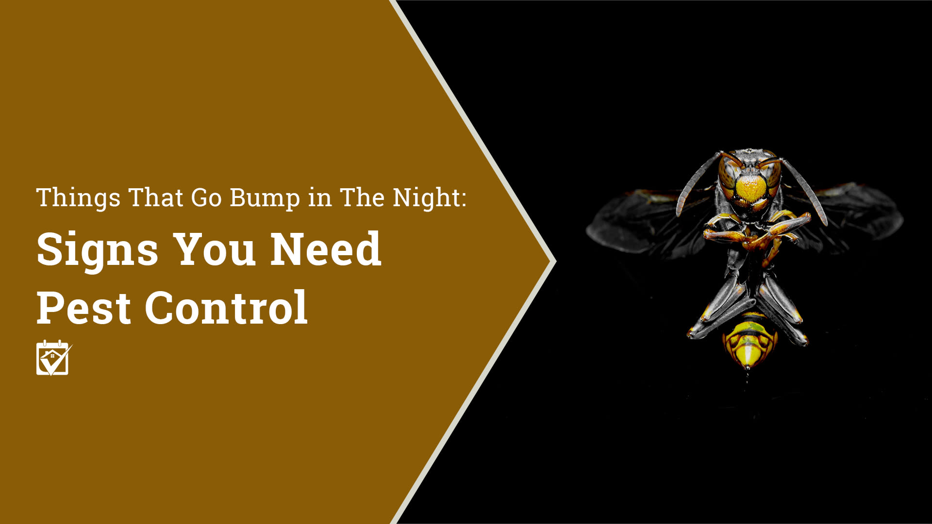 Signs you need pest control