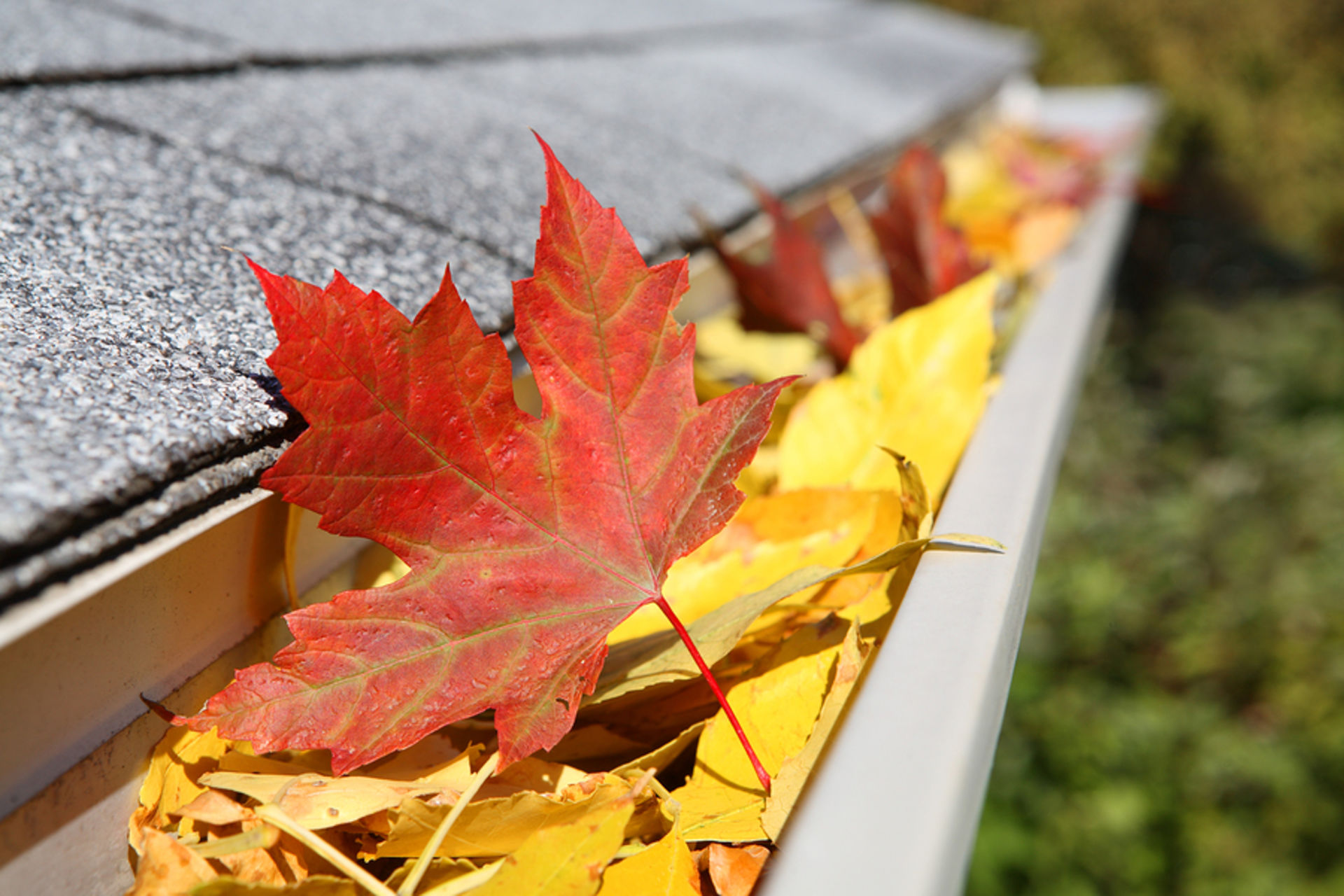 Can you be-leaf it's gutter maintenance time again
